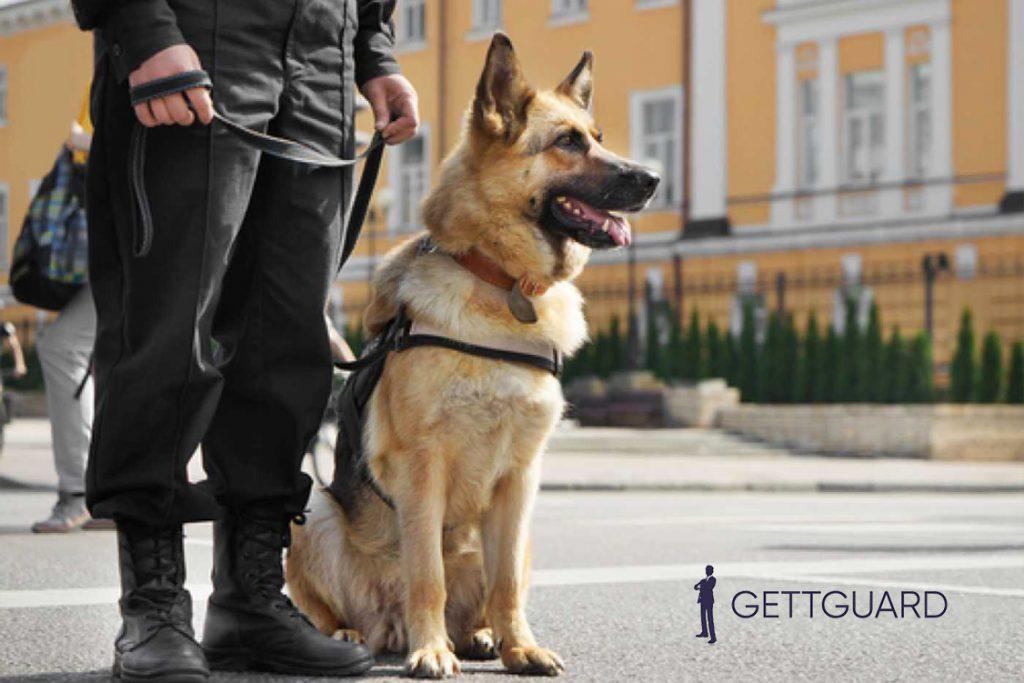 GettGuard : Nouvelles conditions d'emploi d'agent de sécurité cynophile