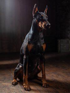 Gettguard réserver un maître chien