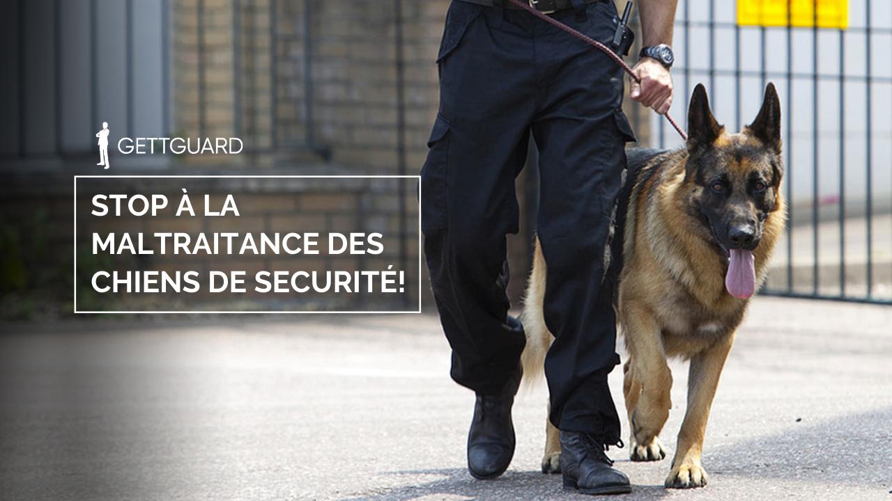 Maltraitance des chiens de sécurité: comment la signaler et quelles sont les sanctions ?